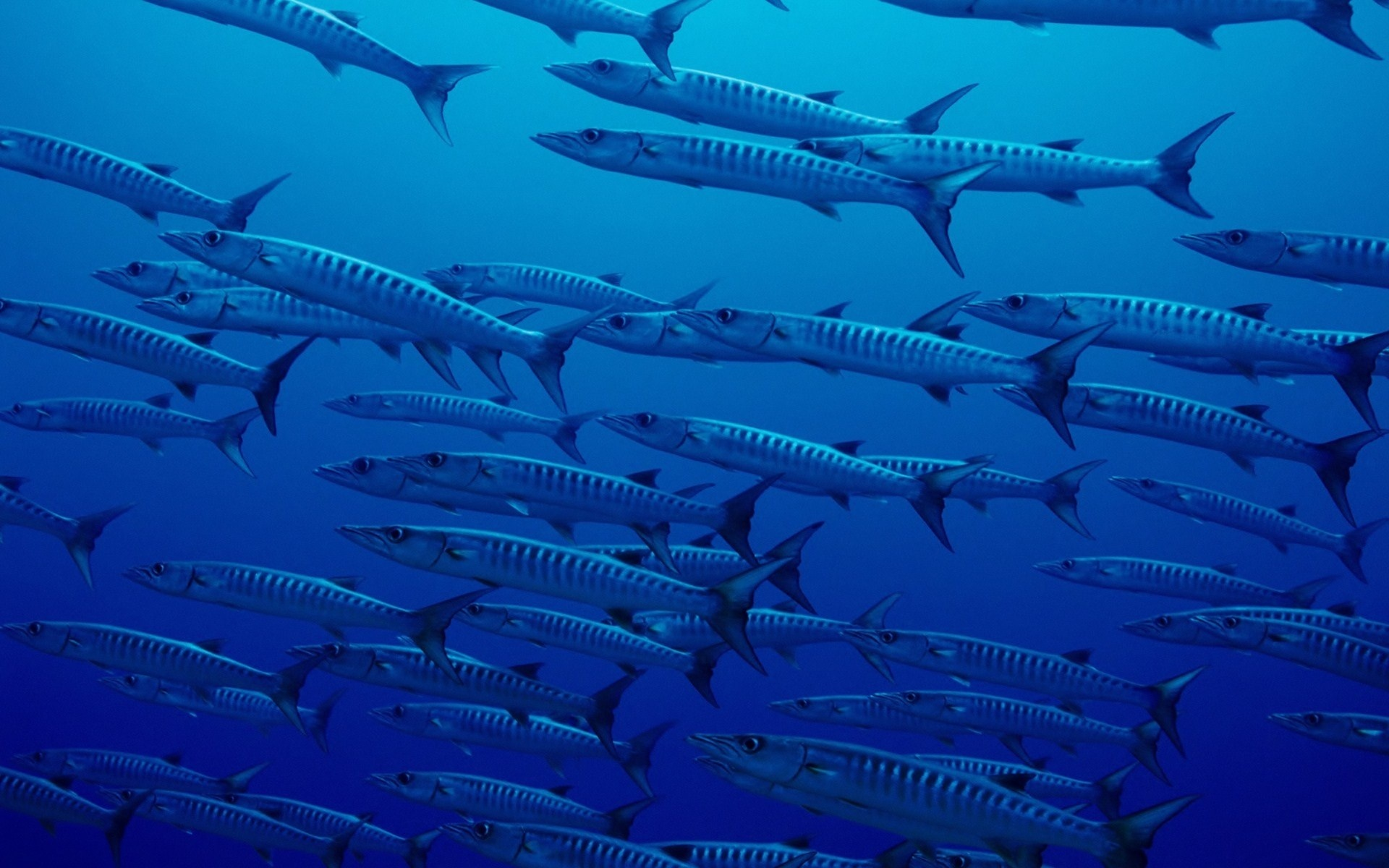 Wallpaper Beautiful Pictures The Ocean Photo Under Water Fish