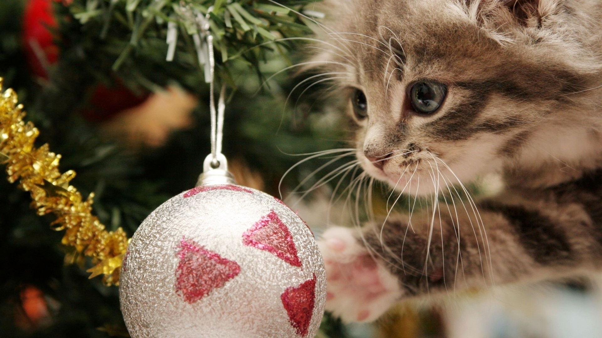 Wallpaper New Year New Year Toy Cat Hd Picture