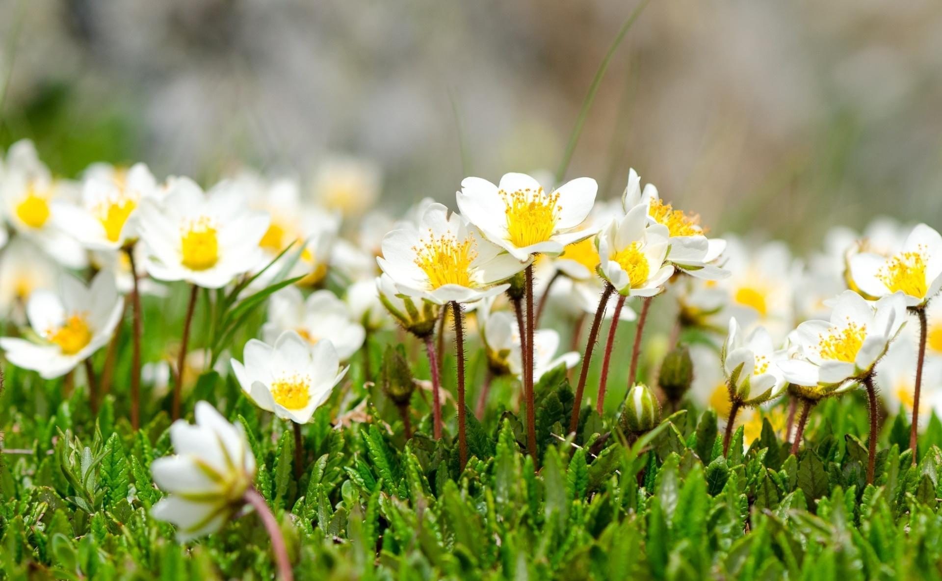 Обои Весна, позитив, макро фото тема. Природа foto 8
