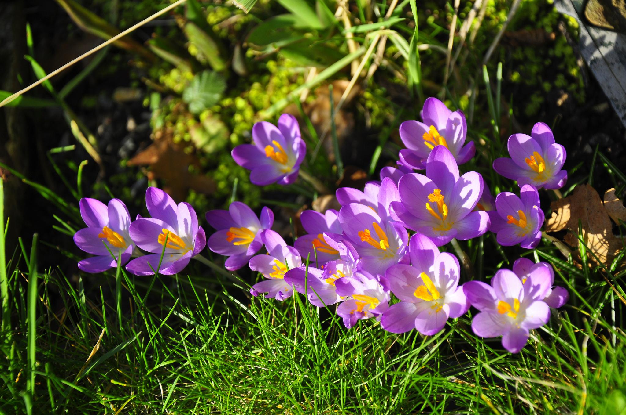 Обои Весна, позитив, макро фото тема. Природа foto 6