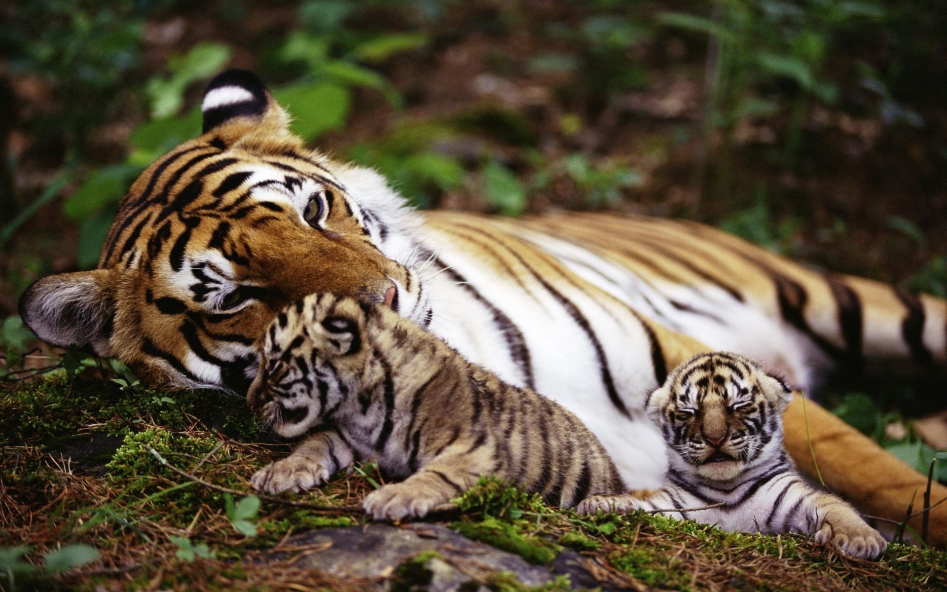 Обои Хищник, позитив, тема, малыш. Животные foto 6
