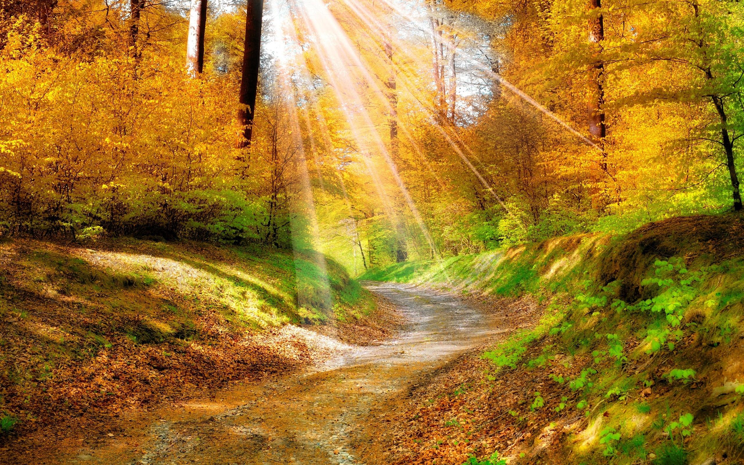 Перший понеділок осені, на Прикарпатті супроводжуватиметься сонячною погодою та відсутністю опадів