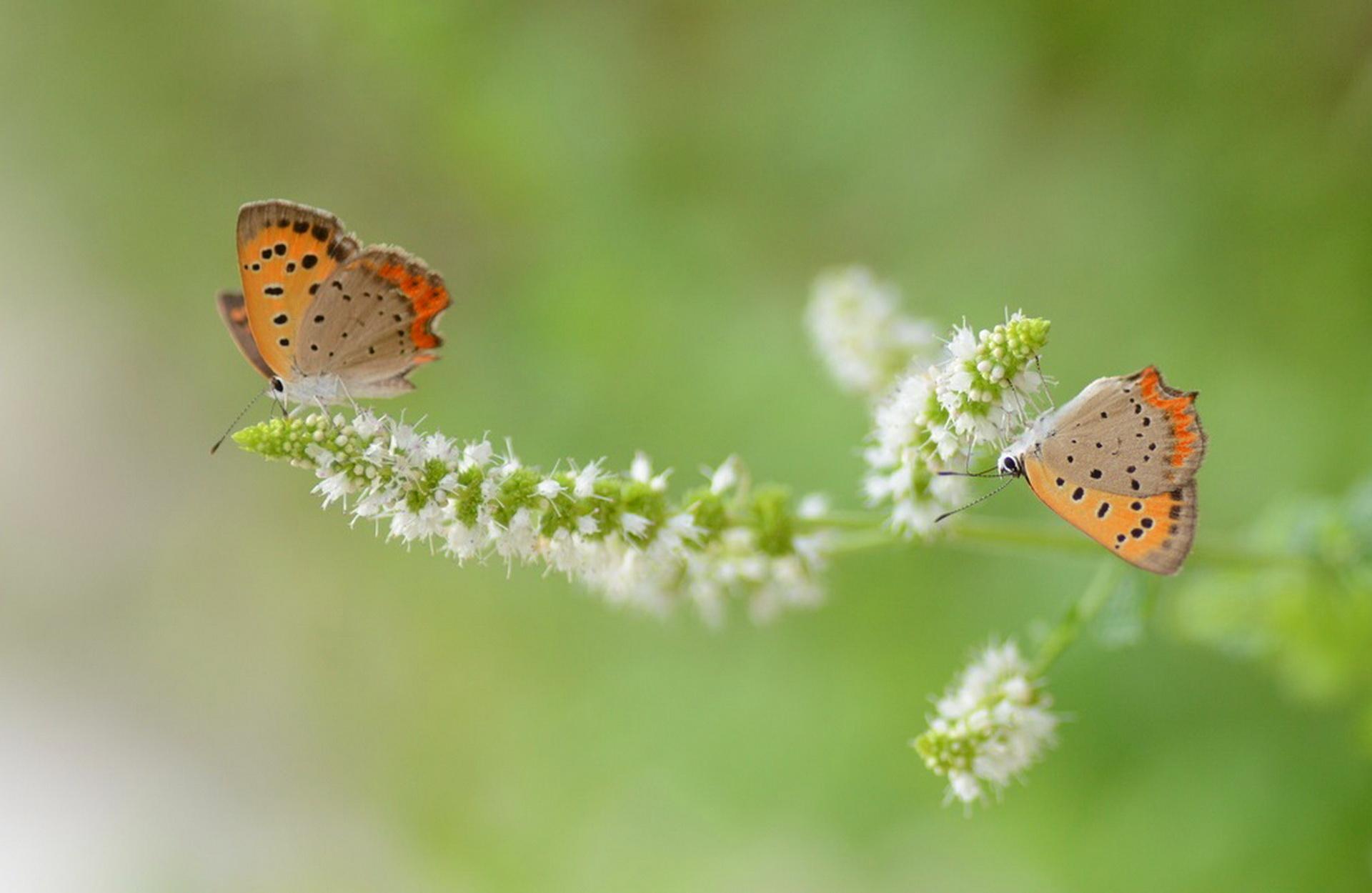 Обои мир бабочек, красота, цветок. Макро foto 7