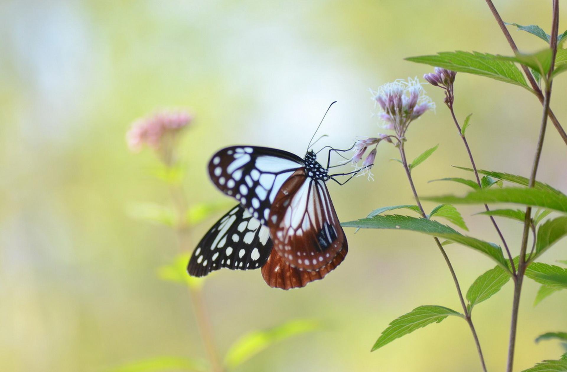 Обои мир бабочек, красота, цветок. Макро foto 10