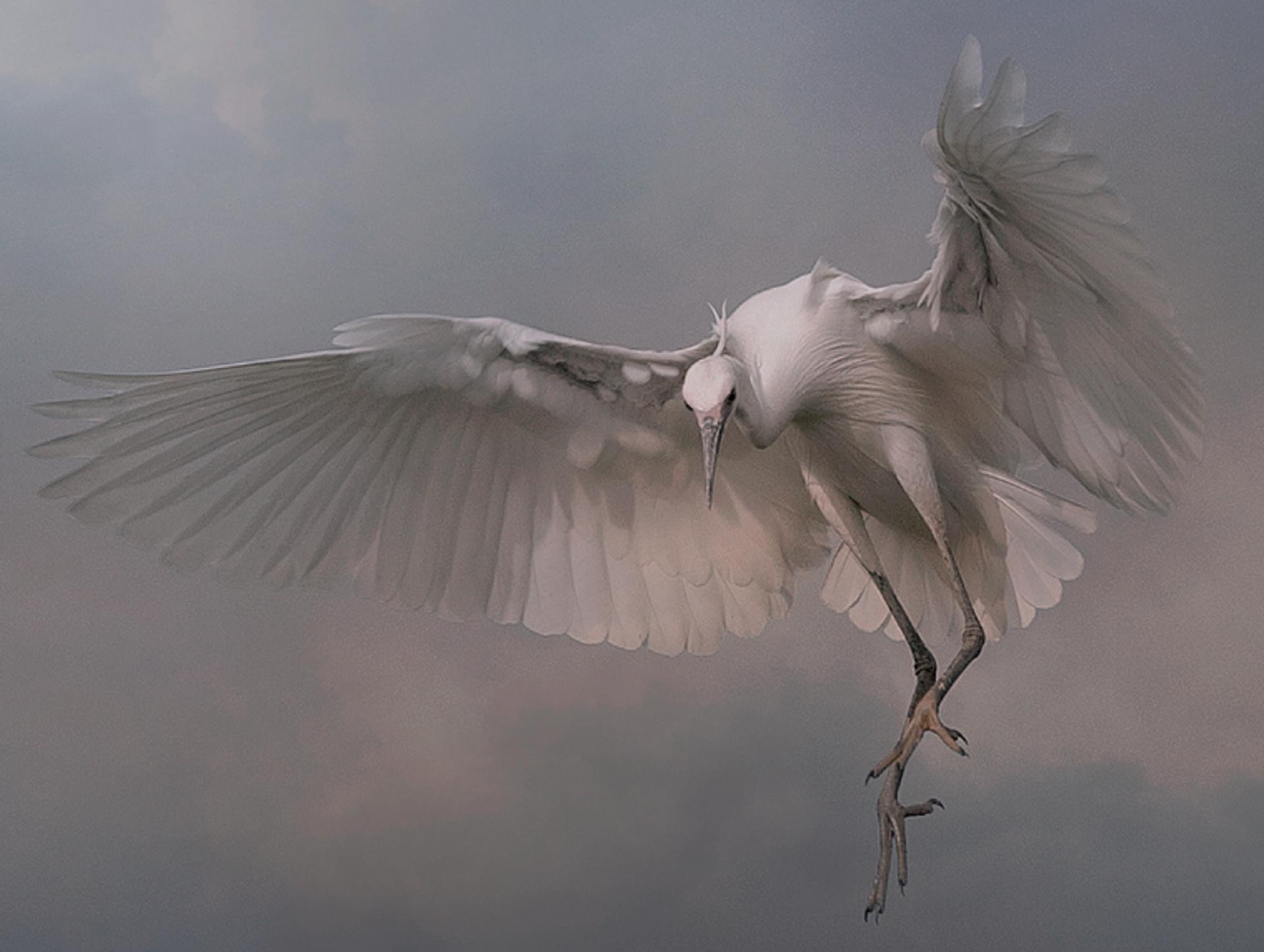 Velký pták zdarma