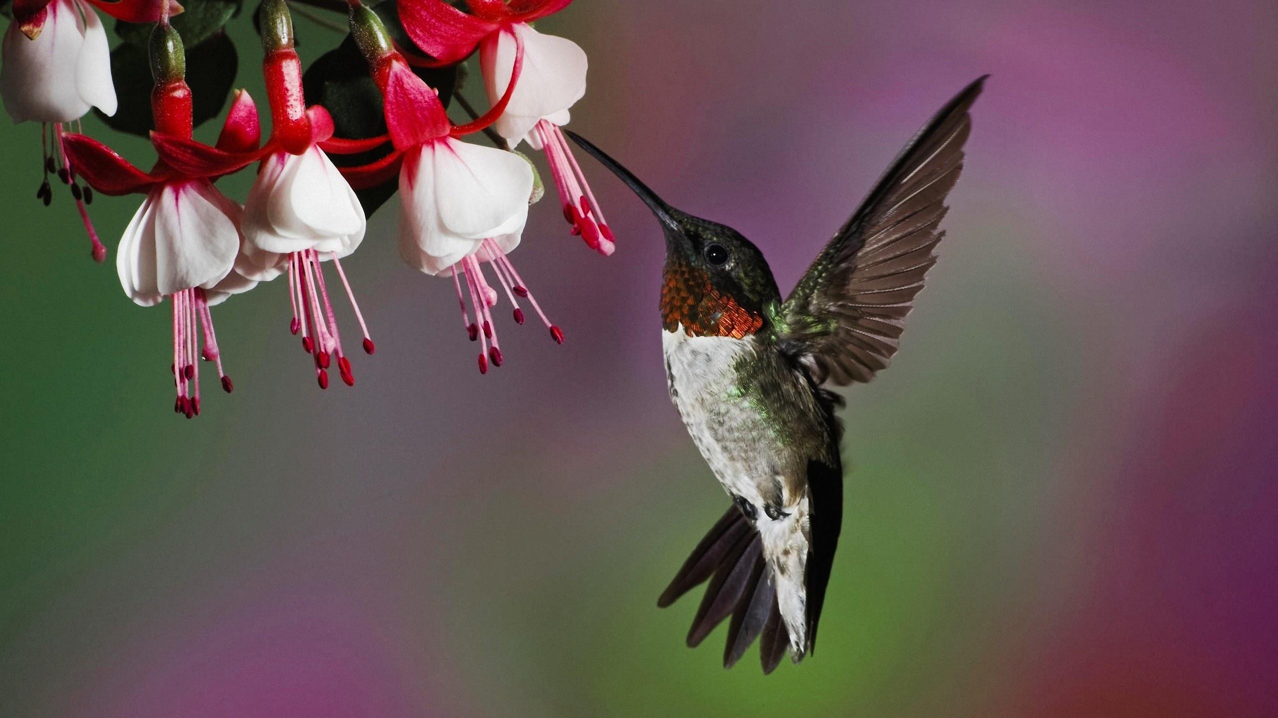 Обои цветы, птицы мира, красиво. Животные foto 8