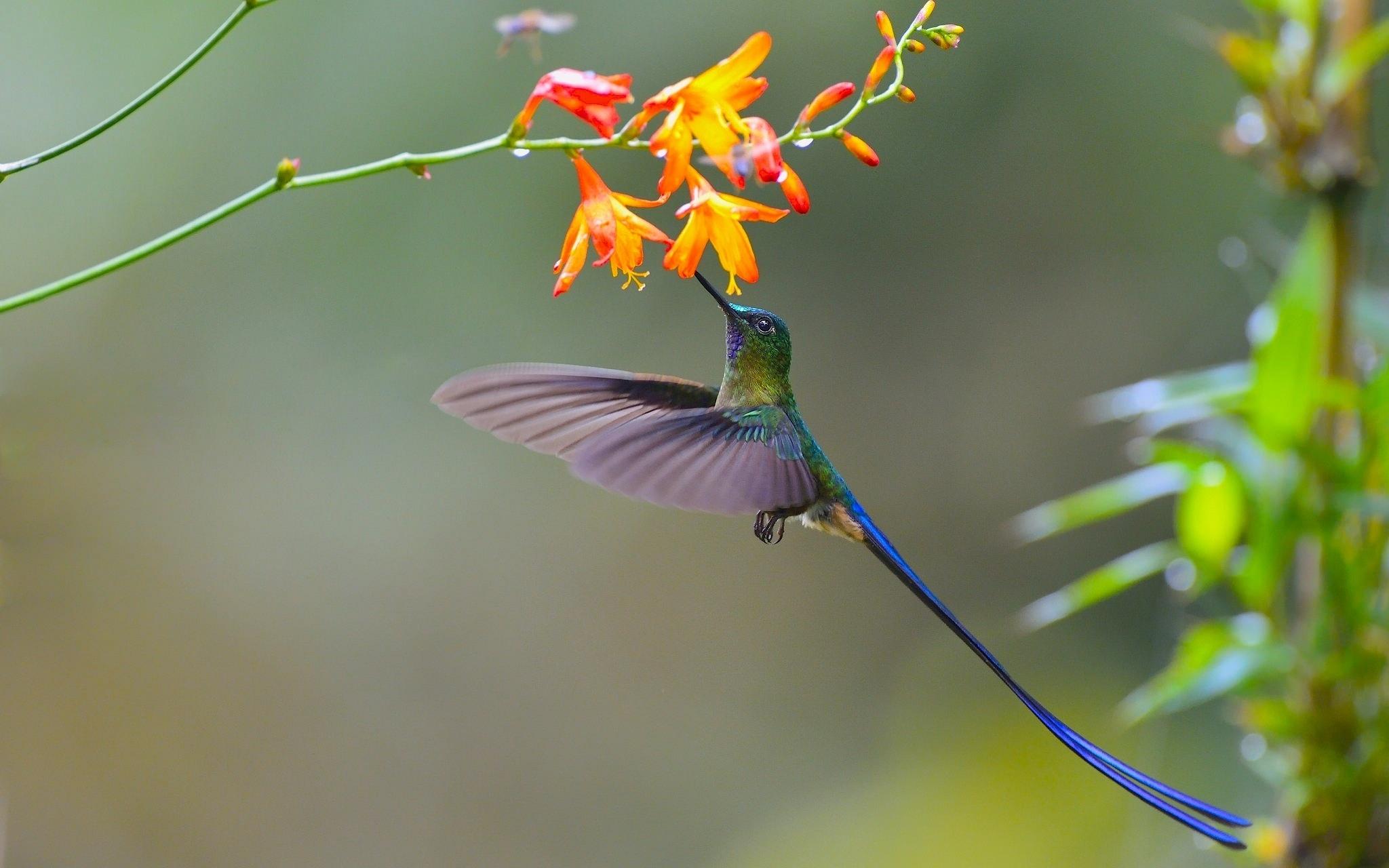 Обои цветы, птицы мира, красиво. Животные foto 14