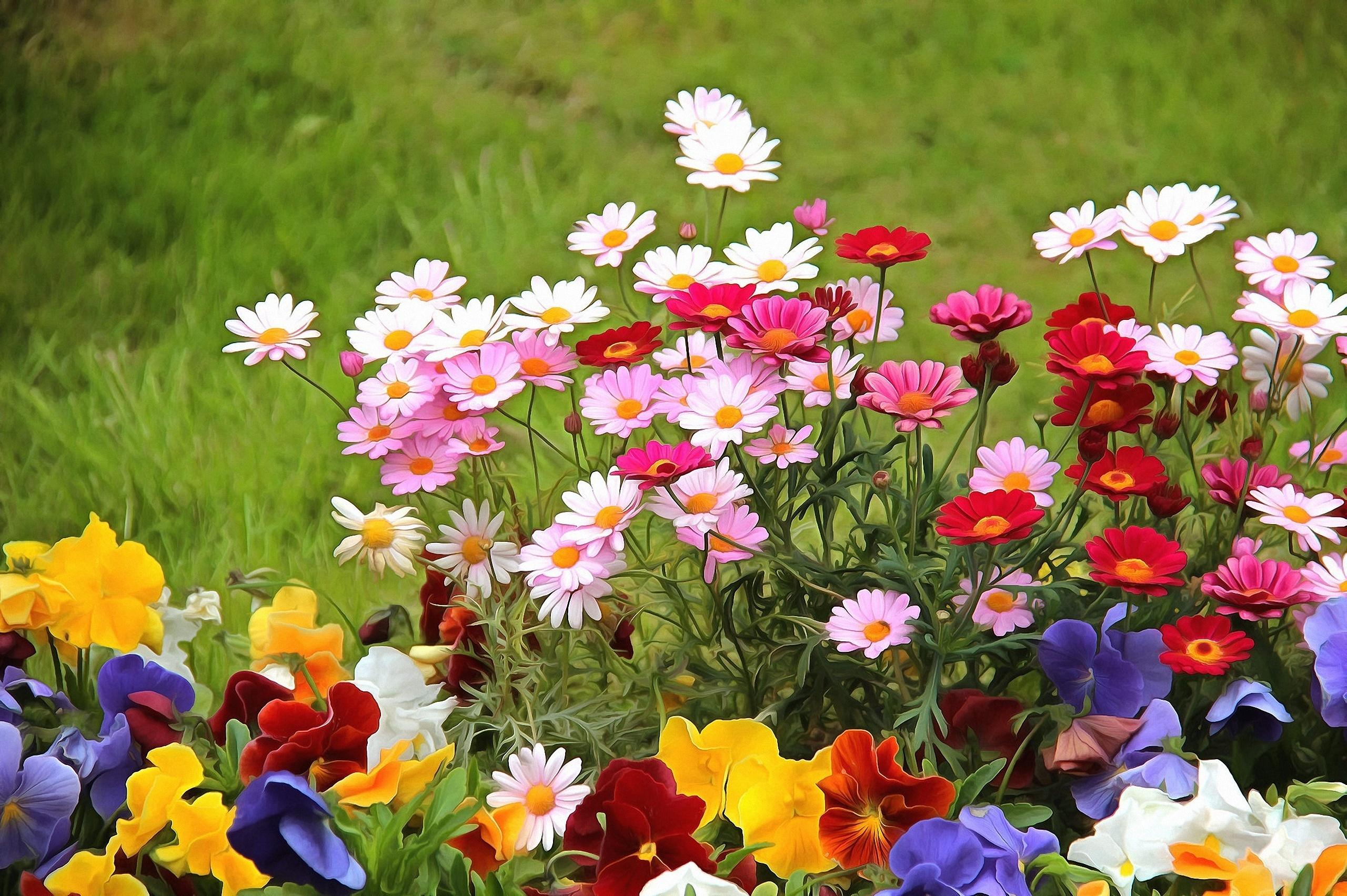 Обої на моніторі |  Квіти |  літо, красиво, красиво