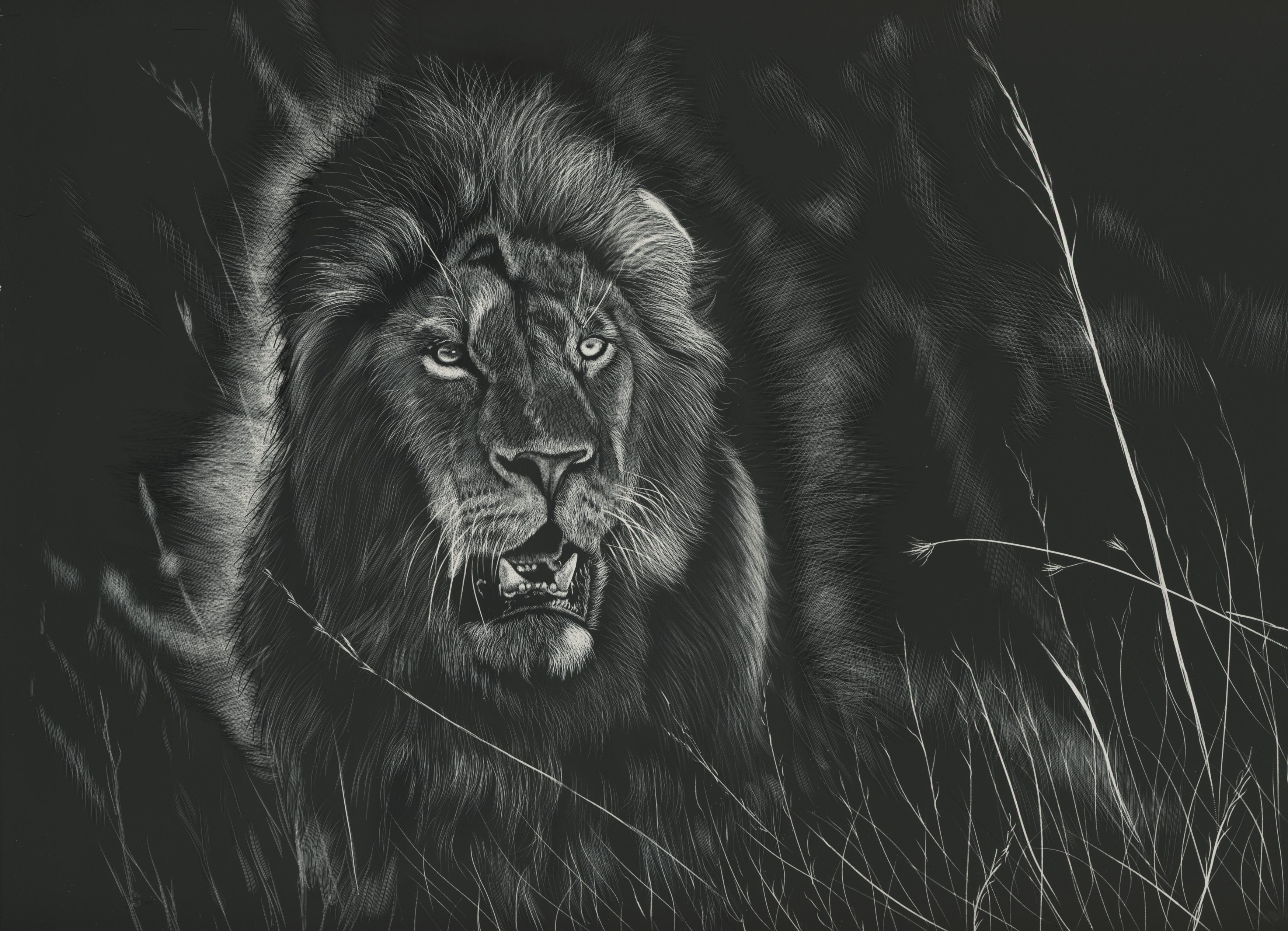Wallpaper 3d Wallpapers Lion Black And White Background Predator