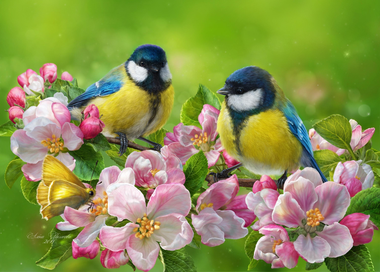 Обои цветы, птицы мира, красиво. Животные foto 18