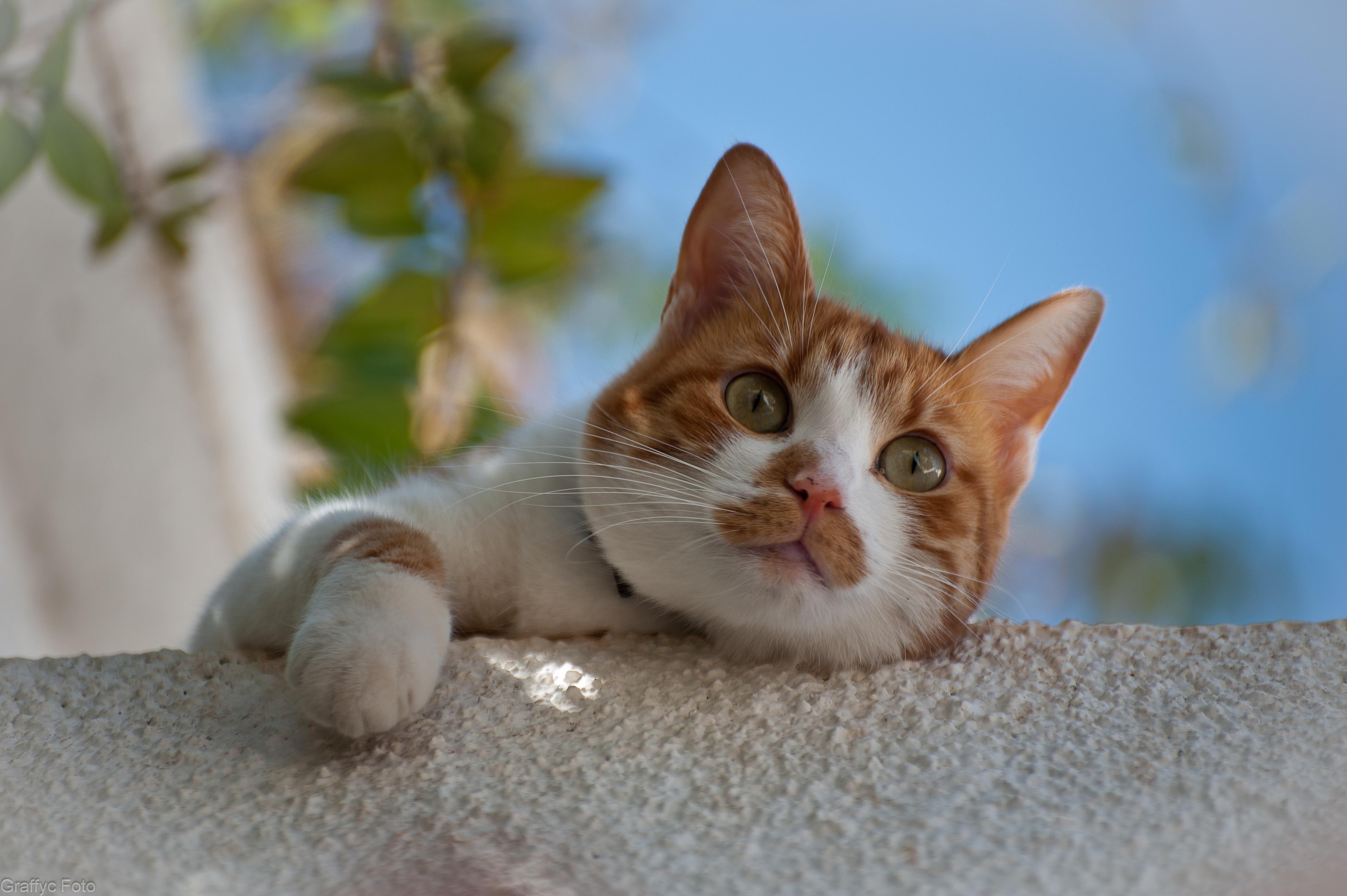 Mezi oběti patří i tahle kočička, která byla zachráněna.