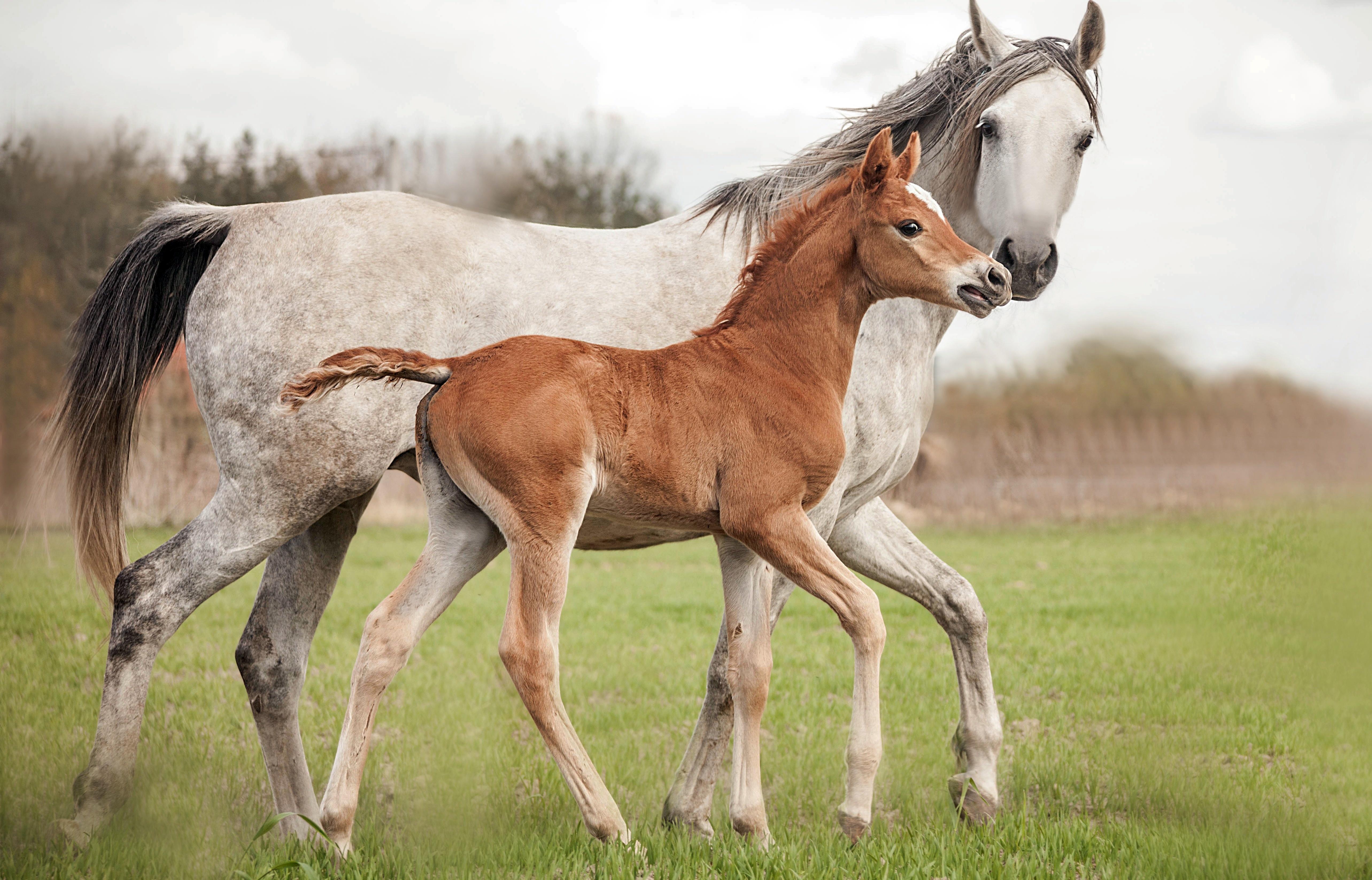 Обои лошадь, жеребёнок. Животные foto 11