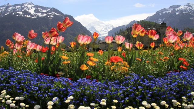 mountains, snow, paint, flowers