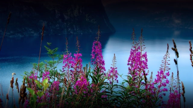 valley, river, flowers