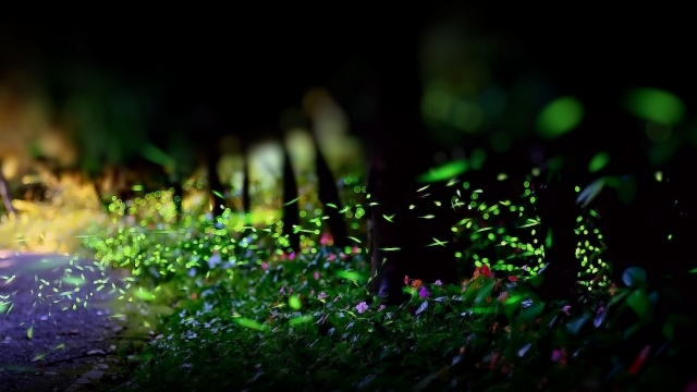 zeleň, listy, tráva