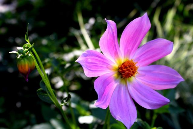 beautiful, flowers