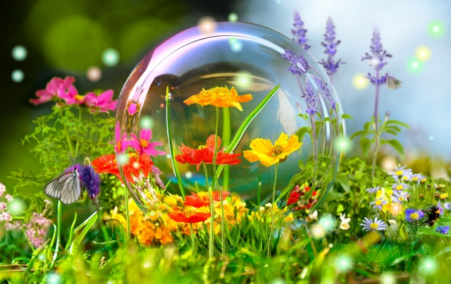 summer, nature, beautiful, photoshop, work, flowers, butterfly, bumblebee, bubble