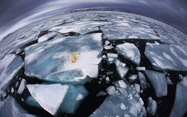 winter, the ocean, white, bear, ice, view, nature, ice, extreme