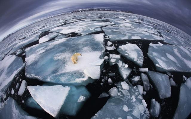 зима, океан, білий, ведмідь, лід, ракурс, природа, крижини, екстрім