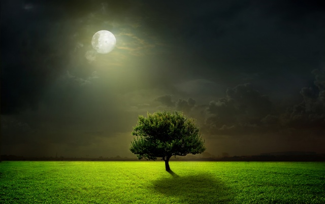 nature, photoshop, tree, night, fantasy, the moon, clouds