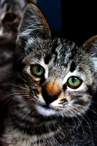 cat, beautiful, animals, eyes