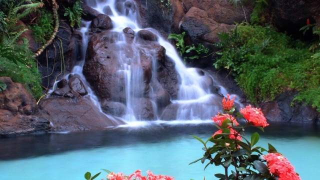 forest, red, tree, leaves, waterfalls, rock, flower