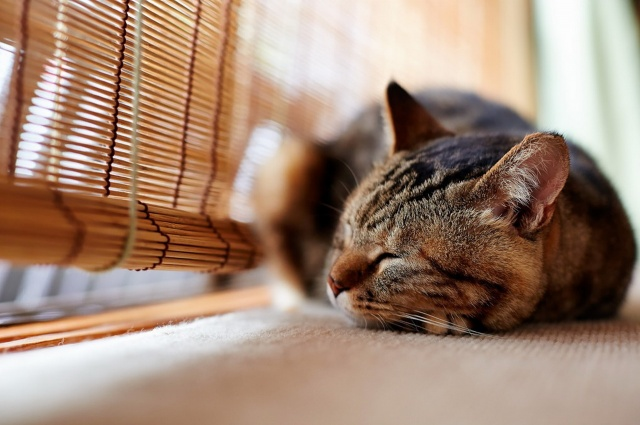 кот, сон, красота
