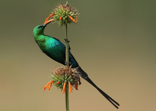 hummingbirds, bird, beauty, birds of the world