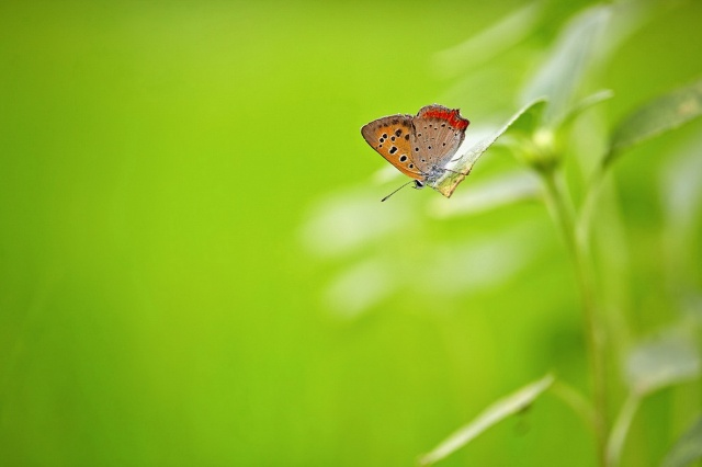butterfly, background, beauty, macro