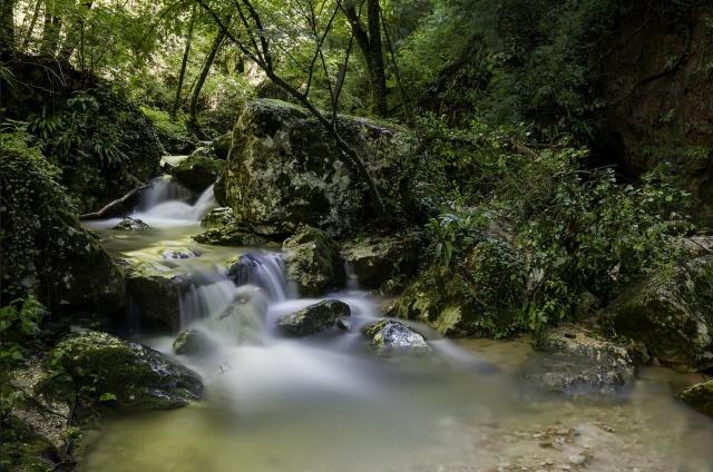 струмок, ліс, каміння, дерева, краса