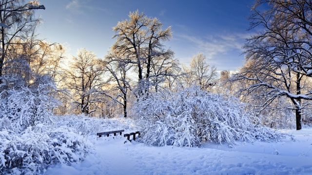 snow, forest, drifts, winter, white