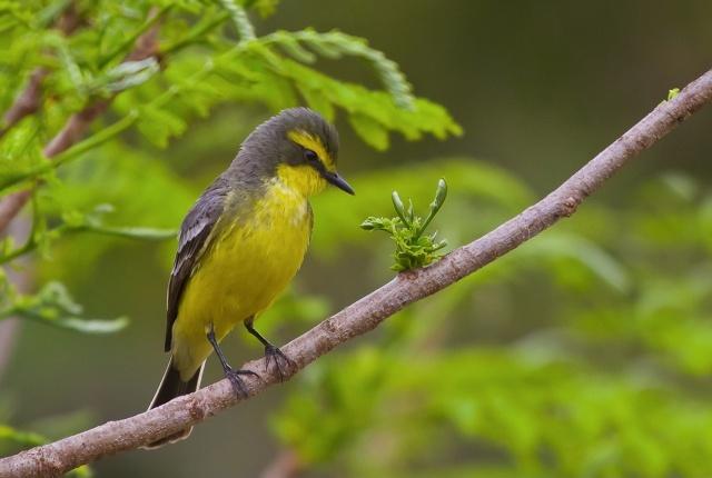 птиця, краса, птахи світу