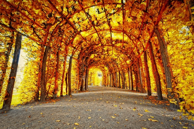 autumn, the tunnel, beauty