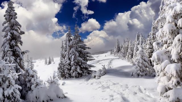 ёлки, снег, сугробы