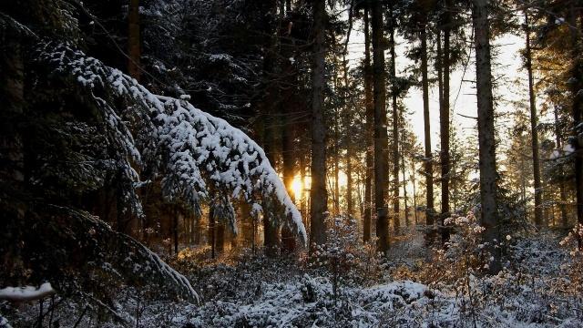 лес, тайга, снег, зима