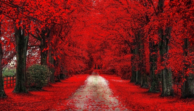 landscape, nature, autumn, road, Red, leaves
