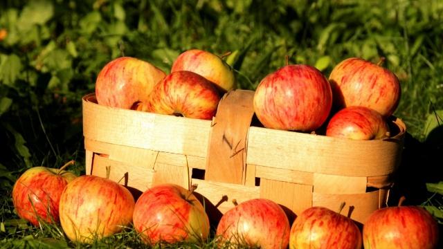 трава, лукошко, яблоки, натюрморт