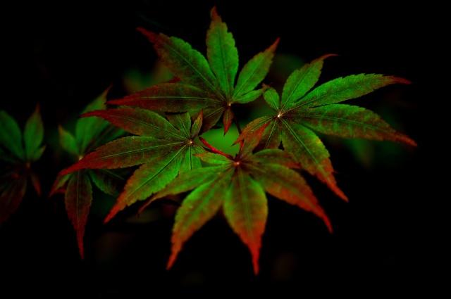 šero, větvička, listy, příroda
