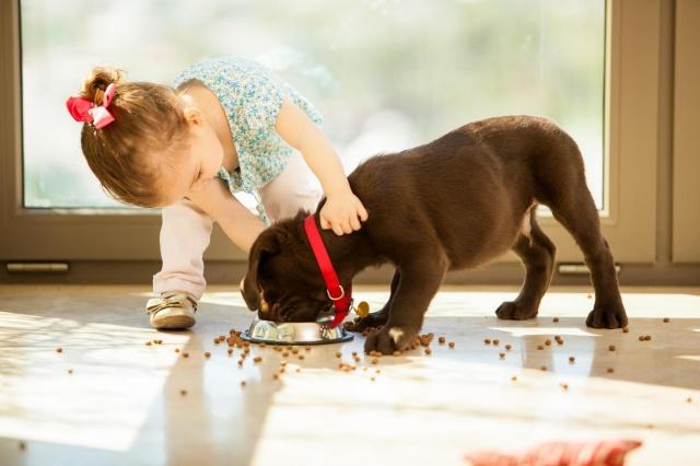 dívka, pes, jídlo, dítě, dům