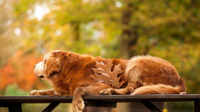 pes, lavice, list, červeno-žluto-zelené pozadí