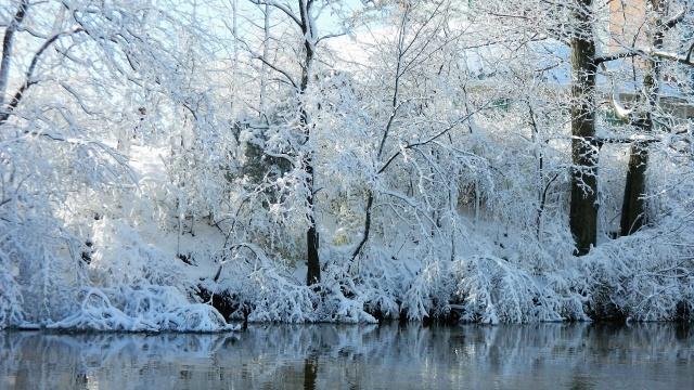 природа, зима, деревья, снег, река