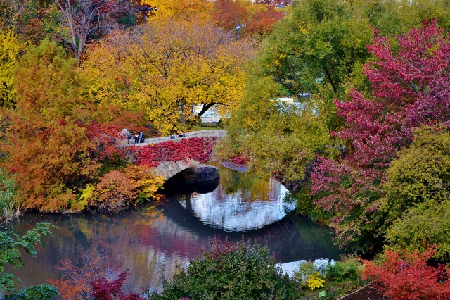 autumn, Park, the bridge, trees, beauty
