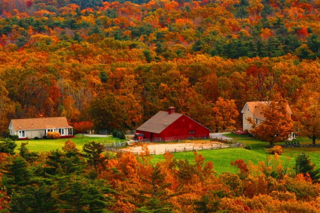 autumn, forest, trees, home, beauty