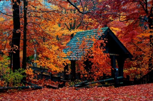 осень, беседка, деревья, парк, красота