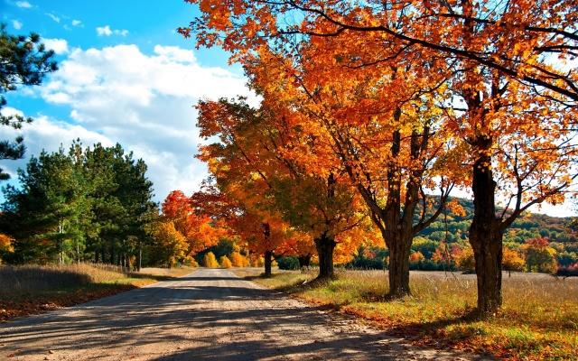 осінь, дерево, листя, рок, зелений, патч