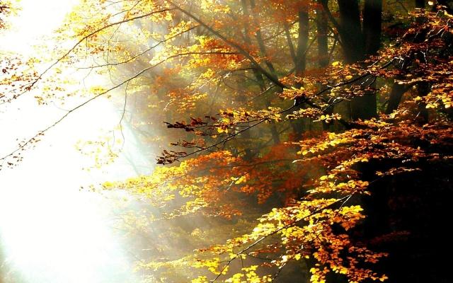 ліс, Рей, світ, сонячне світло, осінь, дерева