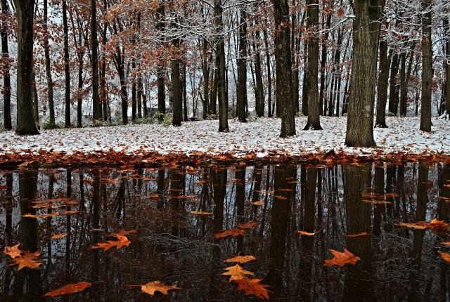 зима, поздняя осень, парк, снег, первый снег, листья, отражение