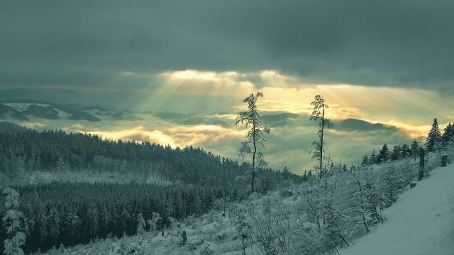 зима, гора, снег, деревья