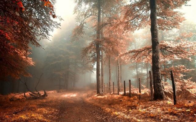 туманний, осінь, ліс, листя, трава