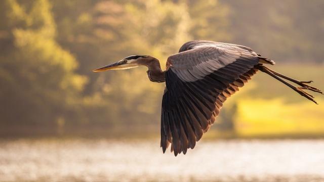 bird, flight, water, ocean, trees